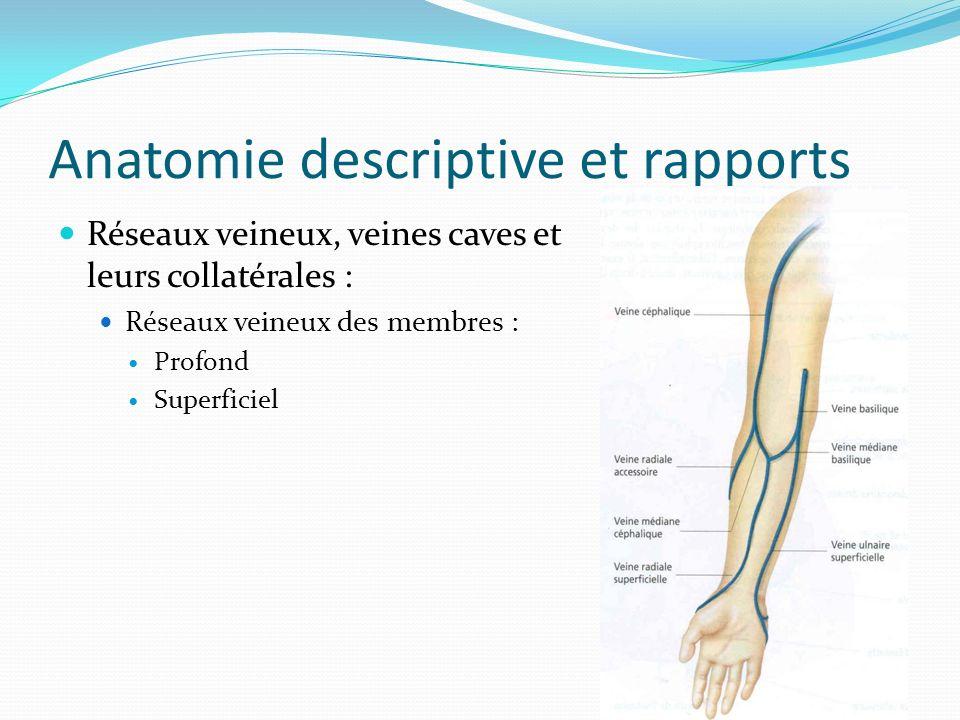 Anatomie descriptive et rapports Réseaux veineux, veines caves et leurs collatérales : Réseaux veineux des membres : Profond Superficiel