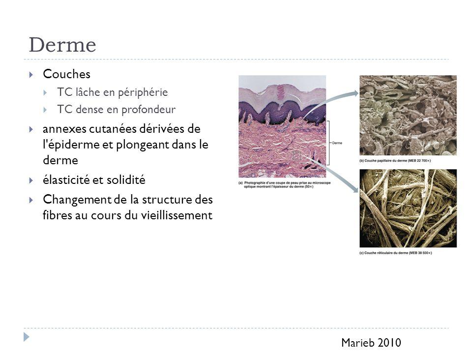 Derme Couches TC lâche en périphérie TC dense en profondeur annexes cutanées dérivées de l épiderme et plongeant dans le derme élasticité et solidité Changement de la structure des fibres au cours du vieillissement Marieb 2010
