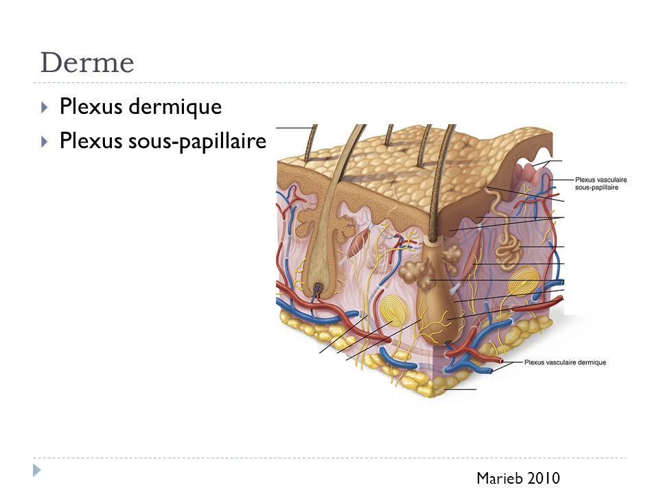 Derme Plexus dermique Plexus sous-papillaire Marieb 2010