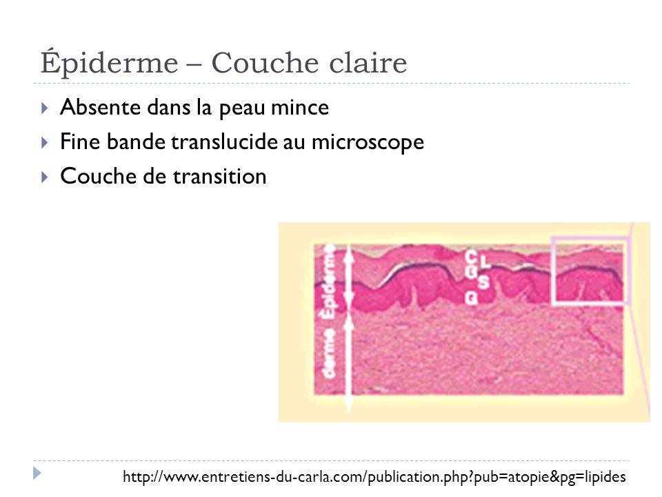 Épiderme – Couche claire Absente dans la peau mince Fine bande translucide au microscope Couche de transition http://www.entretiens-du-carla.com/publi