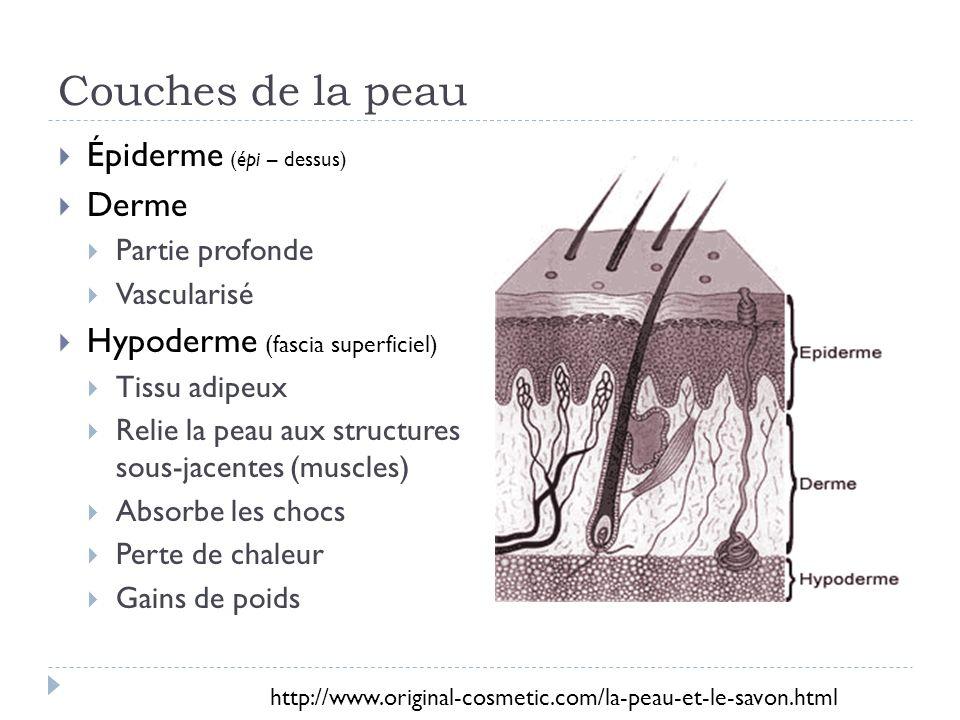 Couches de la peau Épiderme (épi – dessus) Derme Partie profonde Vascularisé Hypoderme (fascia superficiel) Tissu adipeux Relie la peau aux structures