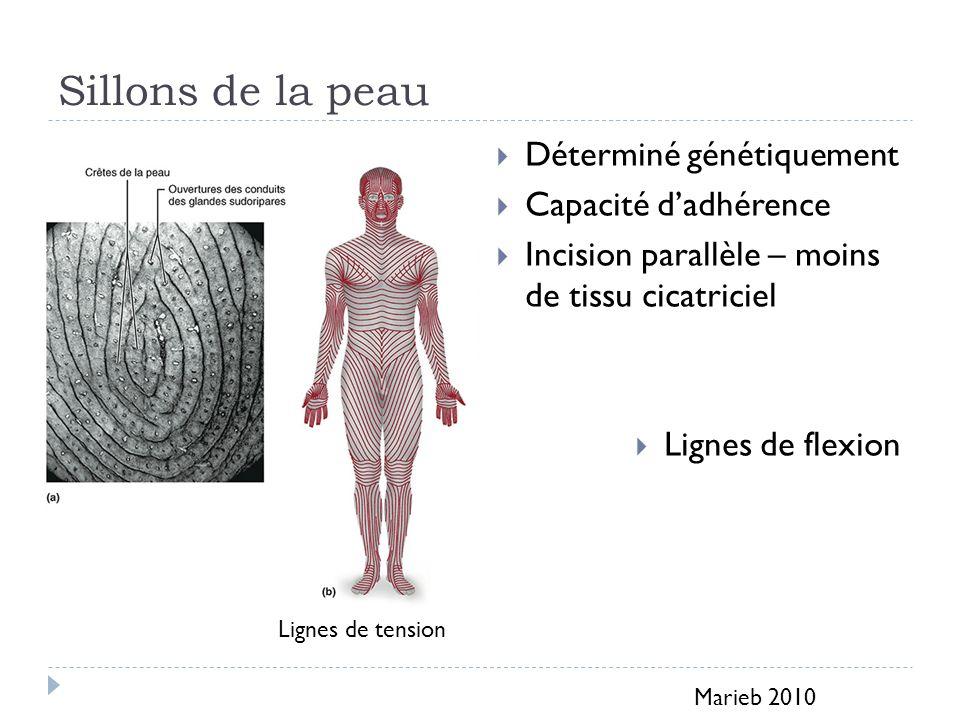 Sillons de la peau Déterminé génétiquement Capacité dadhérence Incision parallèle – moins de tissu cicatriciel Lignes de flexion Marieb 2010 Lignes de tension