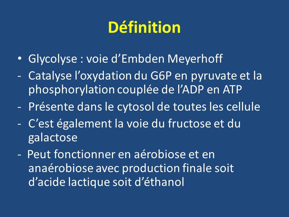 REGULATION METABOLIQUE Phosphofructokinase (PFK1) Le NADH,H+: - Potentialise leffet inhibiteur de lATP - Inhibition levée dès que le NADH,H+ est réoxydé en NAD+