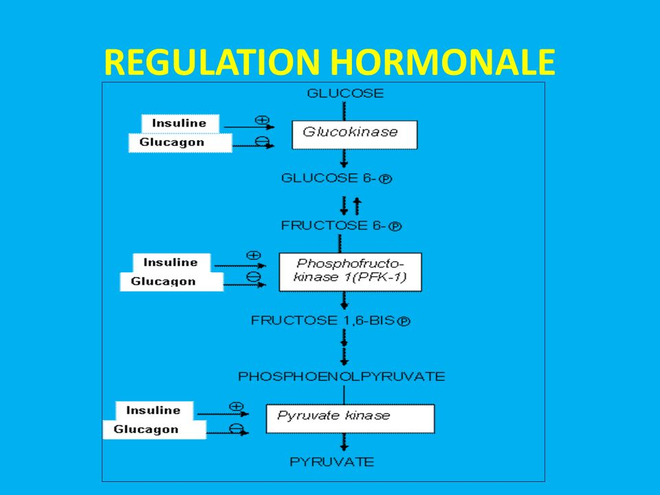 REGULATION HORMONALE