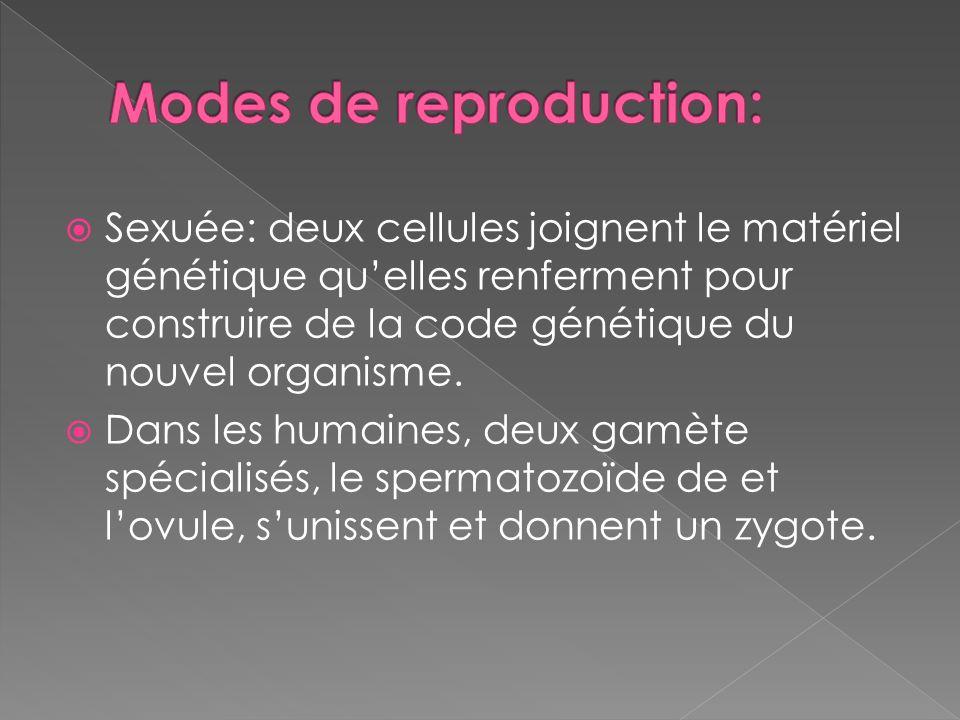 Sexuée: deux cellules joignent le matériel génétique quelles renferment pour construire de la code génétique du nouvel organisme. Dans les humaines, d