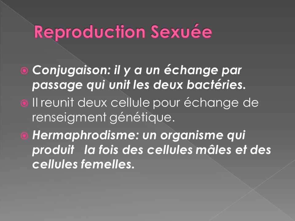 Conjugaison: il y a un échange par passage qui unit les deux bactéries. Il reunit deux cellule pour échange de renseigment génétique. Hermaphrodisme: