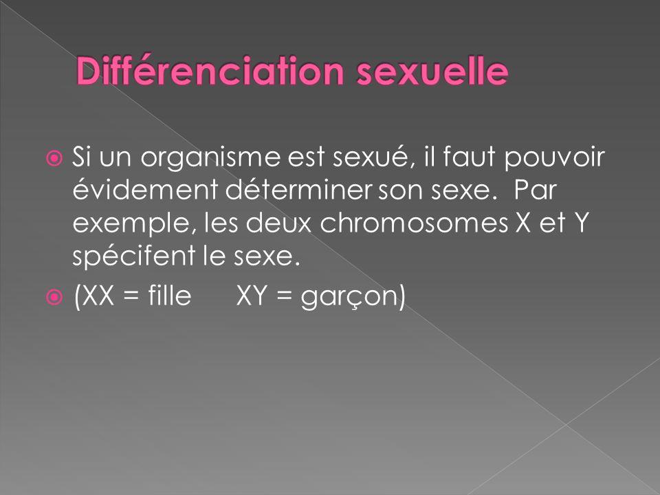 Si un organisme est sexué, il faut pouvoir évidement déterminer son sexe. Par exemple, les deux chromosomes X et Y spécifent le sexe. (XX = fille XY =