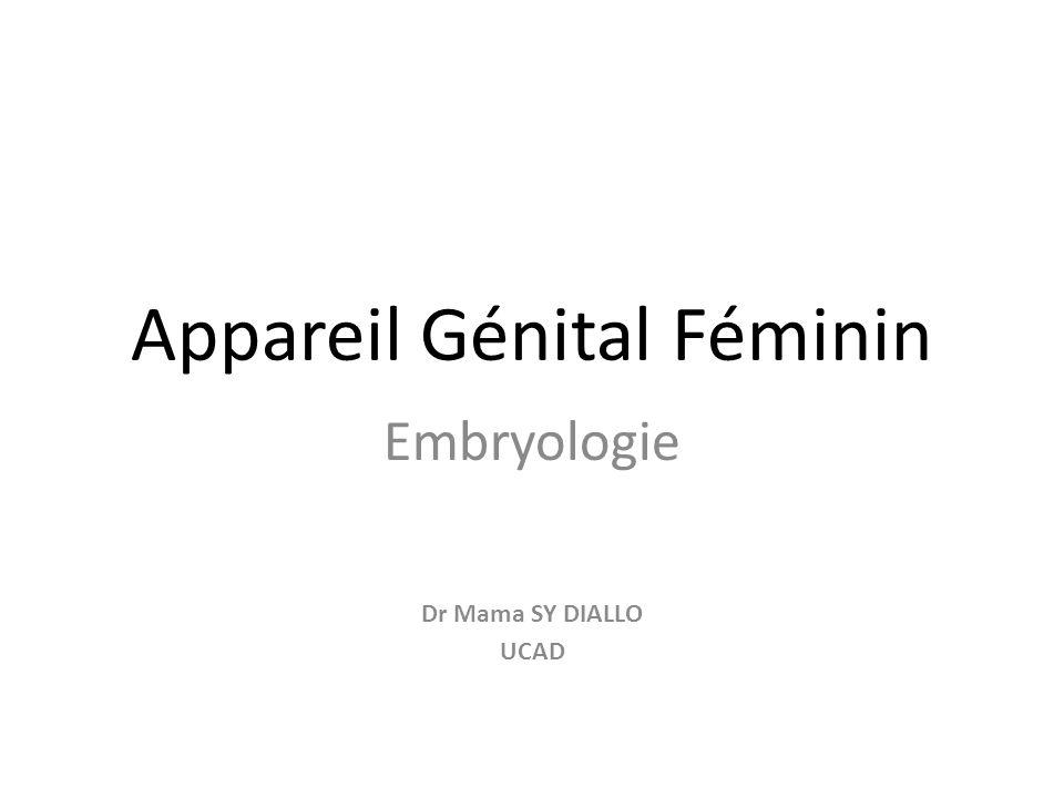 Appareil Génital Féminin Embryologie Dr Mama SY DIALLO UCAD