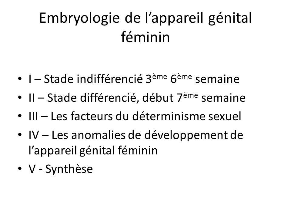 Embryologie de lappareil génital féminin I – Stade indifférencié 3 ème 6 ème semaine II – Stade différencié, début 7 ème semaine III – Les facteurs du