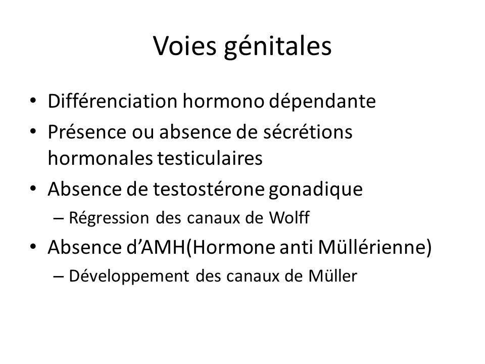 Voies génitales Différenciation hormono dépendante Présence ou absence de sécrétions hormonales testiculaires Absence de testostérone gonadique – Régr