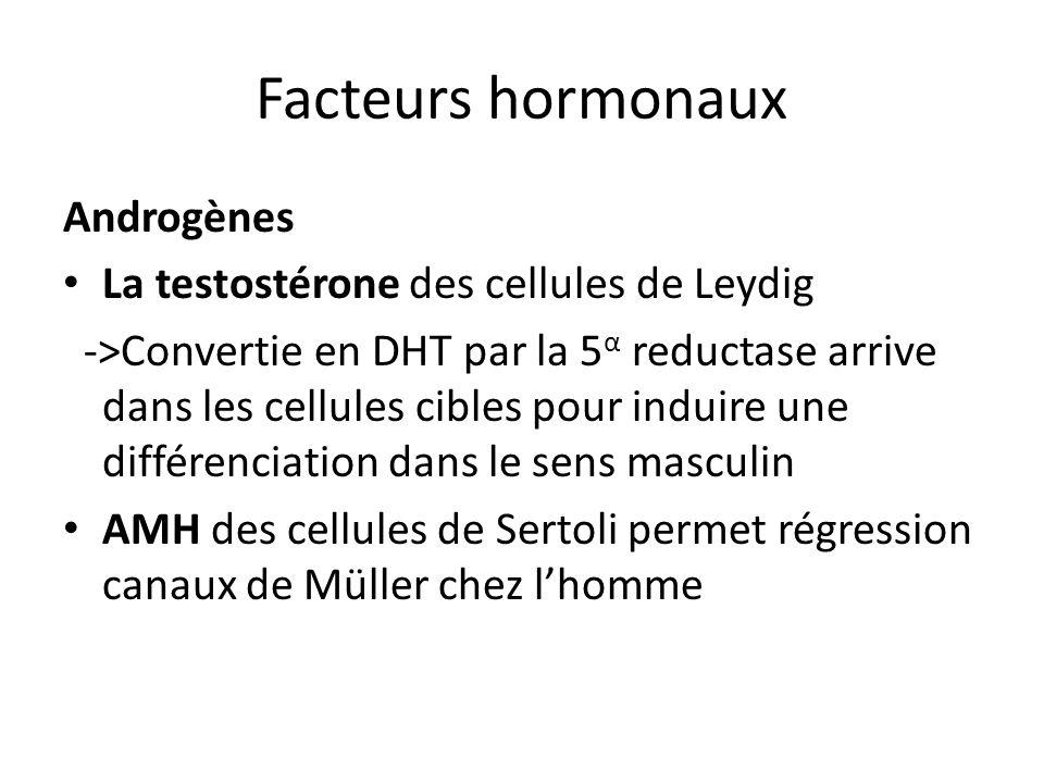 Facteurs hormonaux Androgènes La testostérone des cellules de Leydig ->Convertie en DHT par la 5 α reductase arrive dans les cellules cibles pour indu