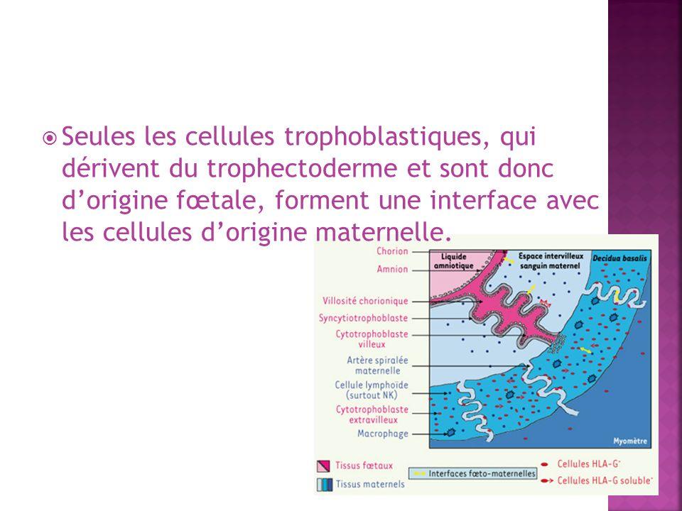 Seules les cellules trophoblastiques, qui dérivent du trophectoderme et sont donc dorigine fœtale, forment une interface avec les cellules dorigine ma