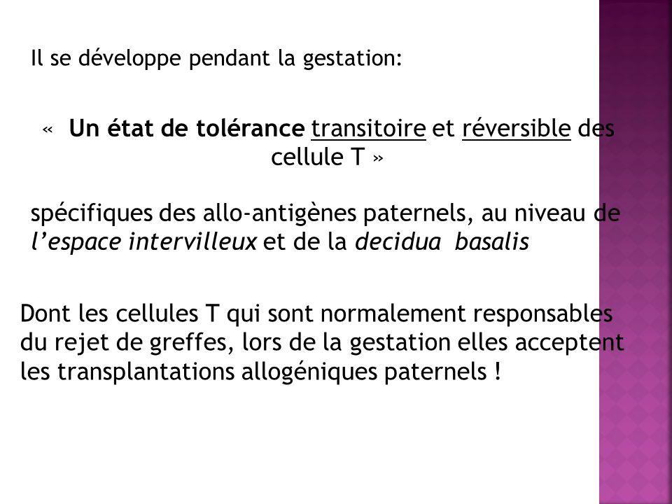 Il se développe pendant la gestation: « Un état de tolérance transitoire et réversible des cellule T » spécifiques des allo-antigènes paternels, au ni