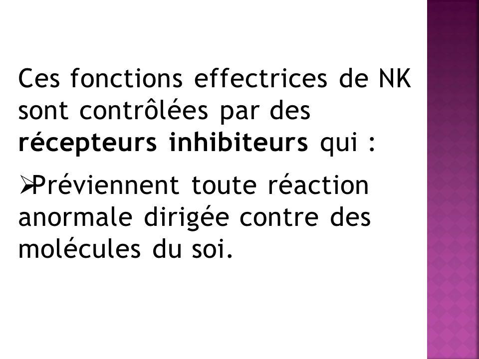 Ces fonctions effectrices de NK sont contrôlées par des récepteurs inhibiteurs qui : Préviennent toute réaction anormale dirigée contre des molécules du soi.