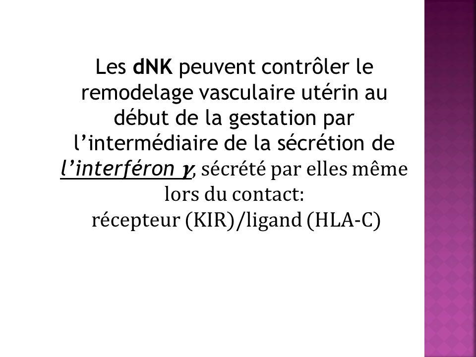 Les dNK peuvent contrôler le remodelage vasculaire utérin au début de la gestation par lintermédiaire de la sécrétion de linterféron, sécrété par elles même lors du contact: récepteur (KIR)/ligand (HLA-C)