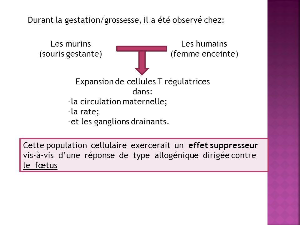 Durant la gestation/grossesse, il a été observé chez: Les murins (souris gestante) Les humains (femme enceinte) Expansion de cellules T régulatrices d