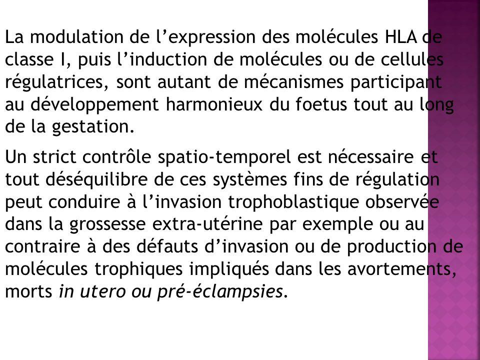 La modulation de lexpression des molécules HLA de classe I, puis linduction de molécules ou de cellules régulatrices, sont autant de mécanismes participant au développement harmonieux du foetus tout au long de la gestation.