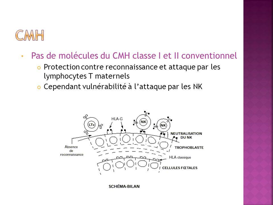 Pas de molécules du CMH classe I et II conventionnel Protection contre reconnaissance et attaque par les lymphocytes T maternels Cependant vulnérabilité à lattaque par les NK