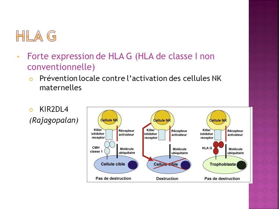 Forte expression de HLA G (HLA de classe I non conventionnelle) Prévention locale contre lactivation des cellules NK maternelles KIR2DL4 (Rajagopalan)