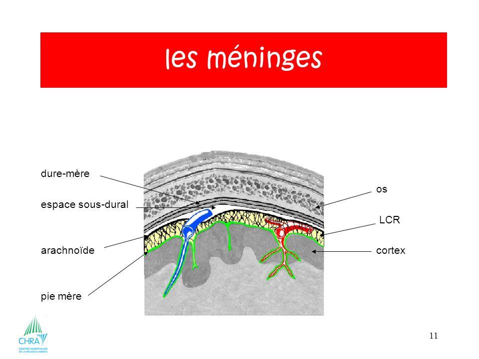 11 dure-mère os espace sous-dural LCR arachnoïdecortex pie mère les méninges