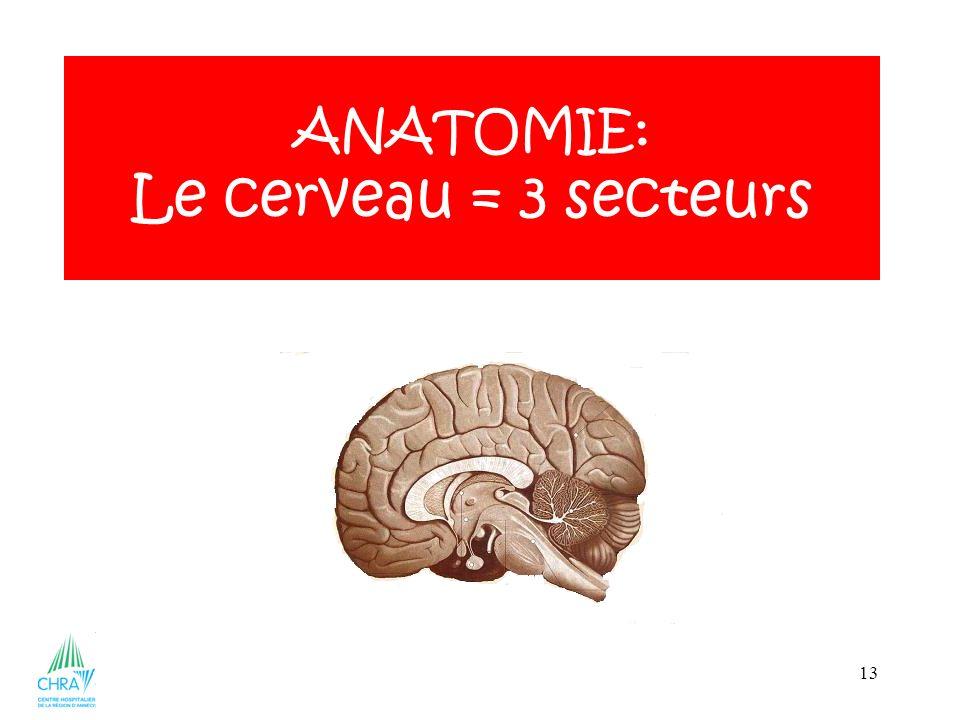 13 ANATOMIE: Le cerveau = 3 secteurs