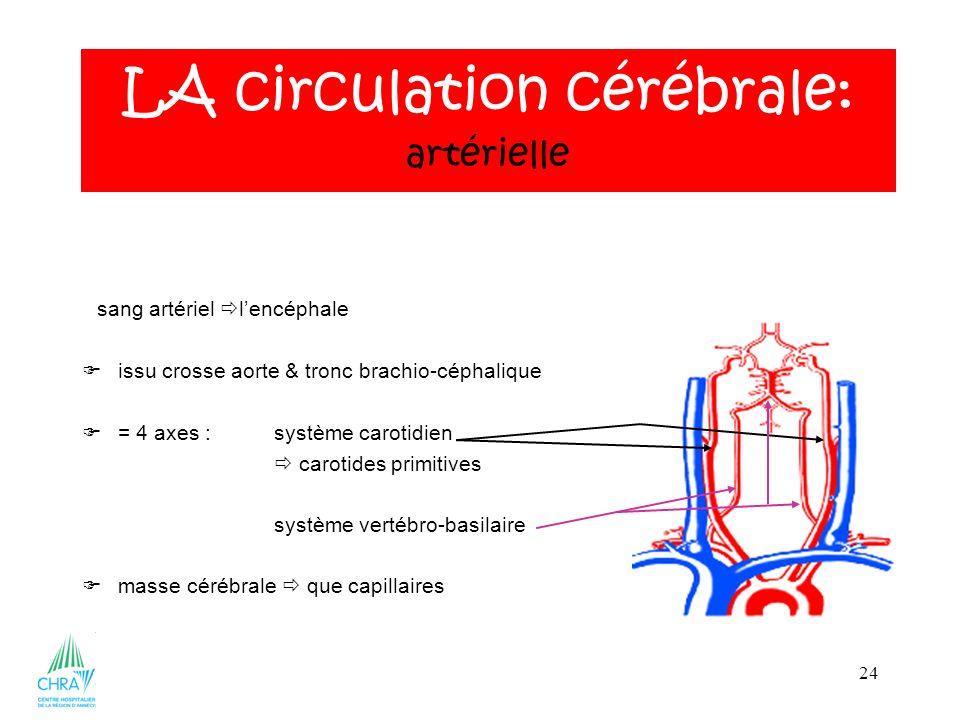 24 sang artériel lencéphale issu crosse aorte & tronc brachio-céphalique = 4 axes :système carotidien carotides primitives système vertébro-basilaire masse cérébrale que capillaires LA circulation cérébrale: artérielle