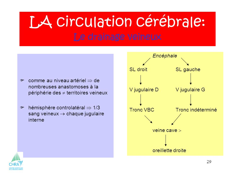 29 comme au niveau artériel de nombreuses anastomoses à la périphérie des territoires veineux hémisphère controlatéral 1/3 sang veineux chaque jugulai