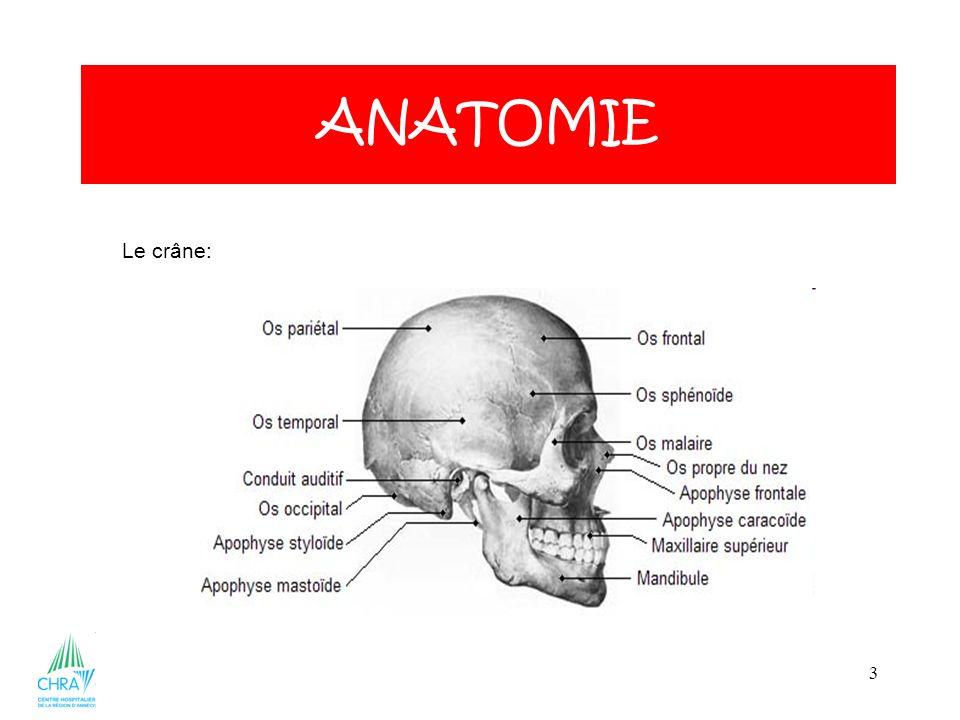 3 ANATOMIE Le crâne: