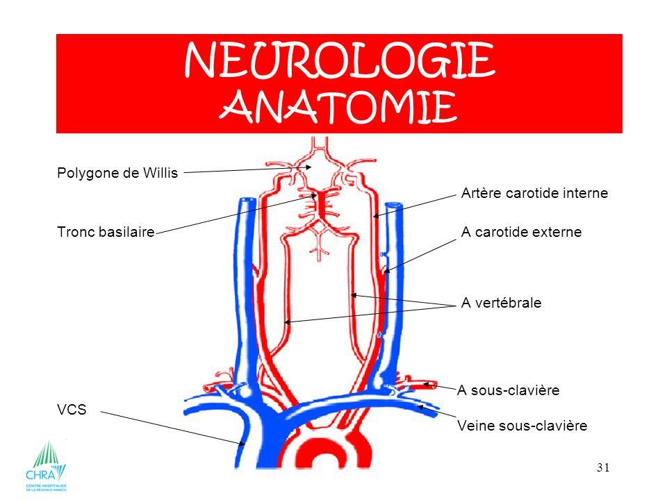 31 Polygone de Willis Artère carotide interne Tronc basilaire A carotide externe A vertébrale A sous-clavière VCS Veine sous-clavière NEUROLOGIE ANATOMIE