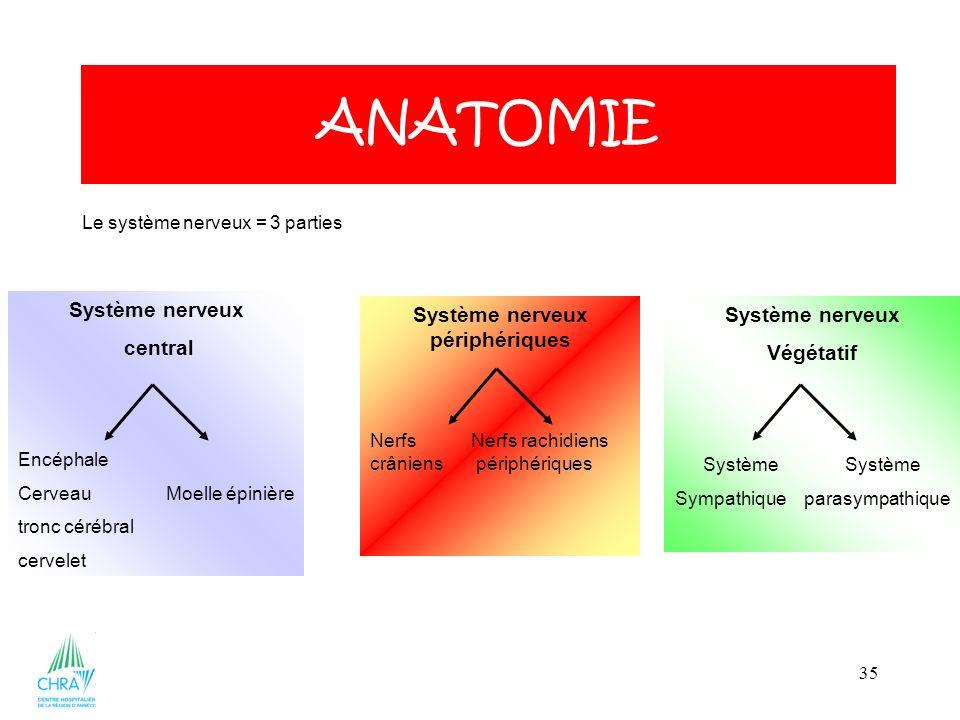 35 ANATOMIE Le système nerveux = 3 parties Système nerveux central Encéphale Cerveau Moelle épinière tronc cérébral cervelet Système nerveux périphériques Nerfs Nerfs rachidiens crâniens périphériques Système nerveux Végétatif Système Sympathique parasympathique
