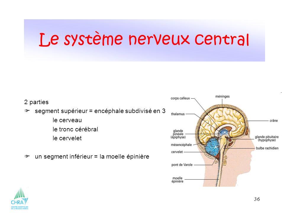 36 2 parties segment supérieur = encéphale subdivisé en 3 le cerveau le tronc cérébral le cervelet un segment inférieur = la moelle épinière Le système nerveux central