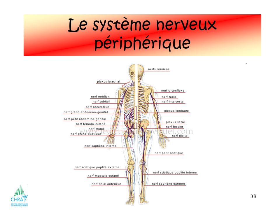 38 Le système nerveux périphérique