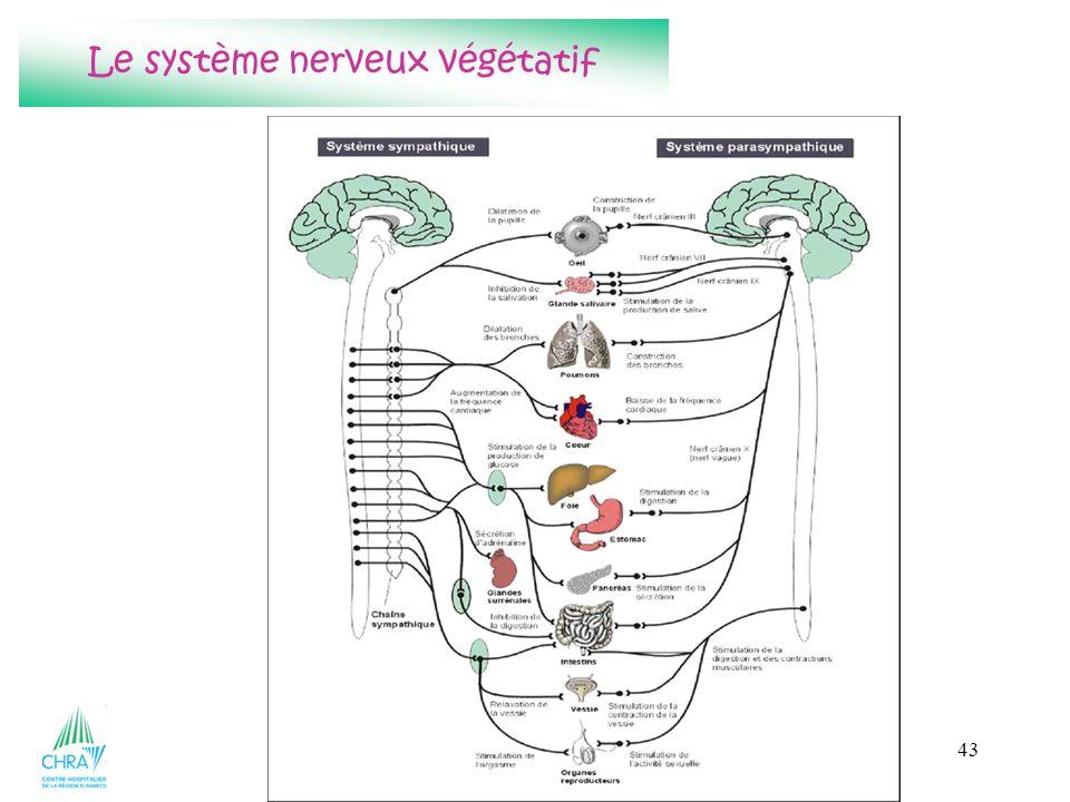 43 Le système nerveux végétatif