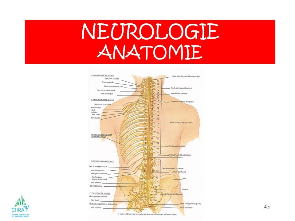 45 NEUROLOGIE ANATOMIE