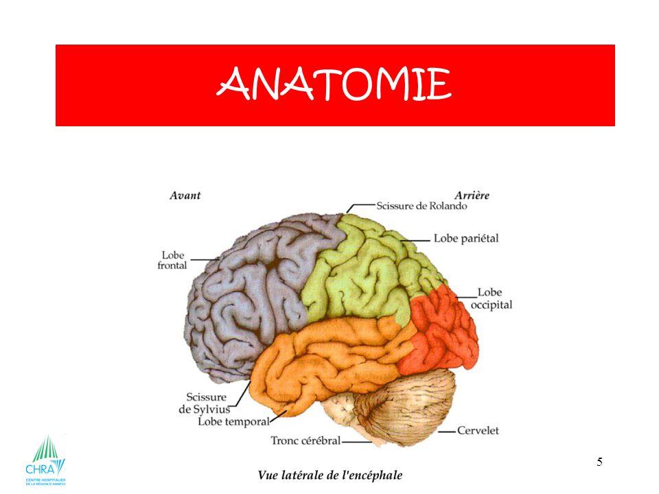 5 ANATOMIE