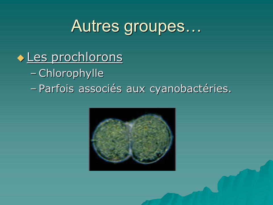 Autres groupes… Les prochlorons Les prochlorons –Chlorophylle –Parfois associés aux cyanobactéries.