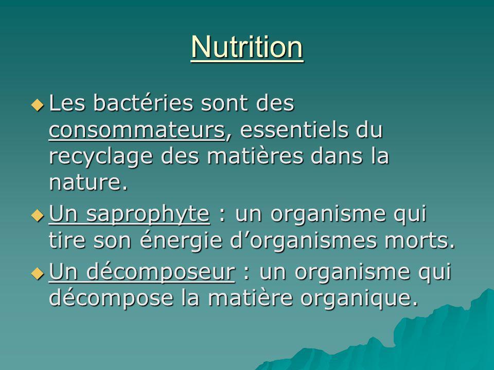 Nutrition Les bactéries sont des consommateurs, essentiels du recyclage des matières dans la nature. Les bactéries sont des consommateurs, essentiels