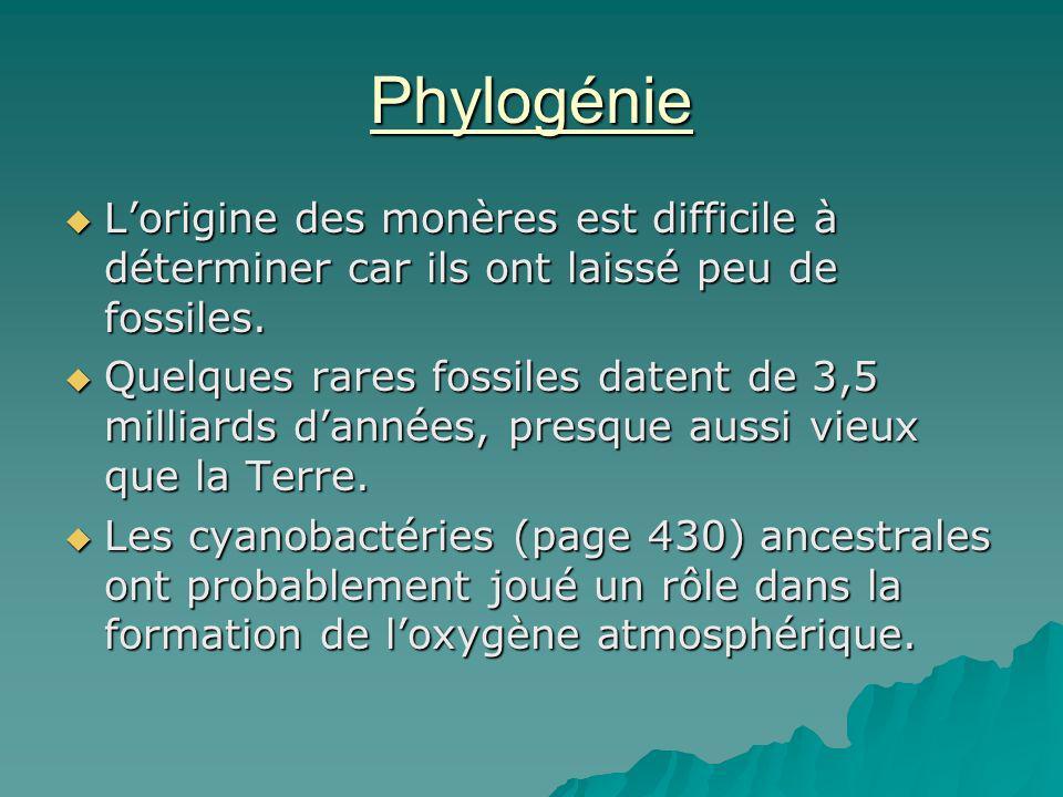 Phylogénie Lorigine des monères est difficile à déterminer car ils ont laissé peu de fossiles. Lorigine des monères est difficile à déterminer car ils