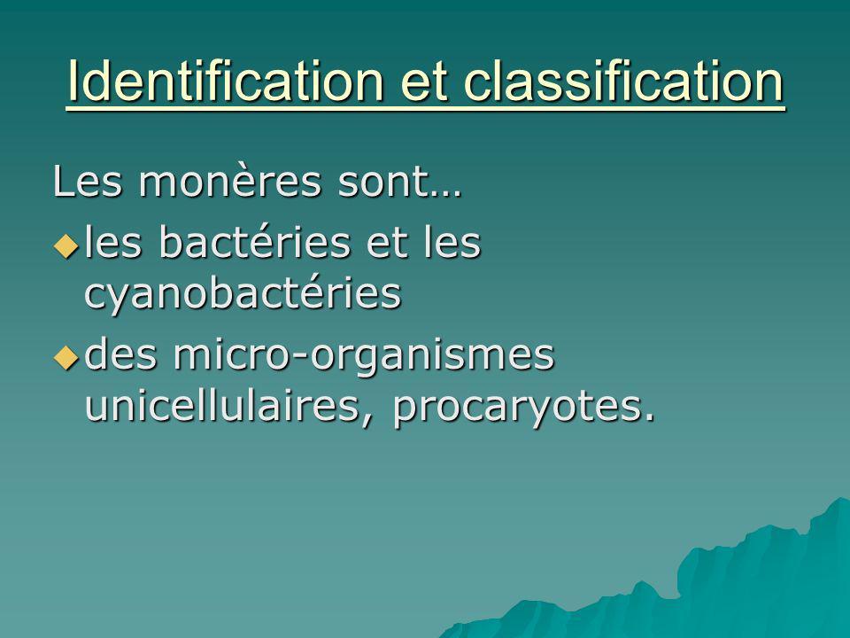 Identification et classification Les monères sont… les bactéries et les cyanobactéries les bactéries et les cyanobactéries des micro-organismes unicel