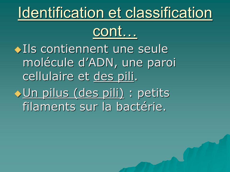 Identification et classification cont… Ils contiennent une seule molécule dADN, une paroi cellulaire et des pili. Ils contiennent une seule molécule d