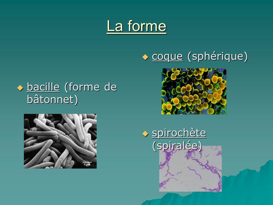 La forme bacille (forme de bâtonnet) bacille (forme de bâtonnet) coque (sphérique) coque (sphérique) spirochète (spiralée) spirochète (spiralée)