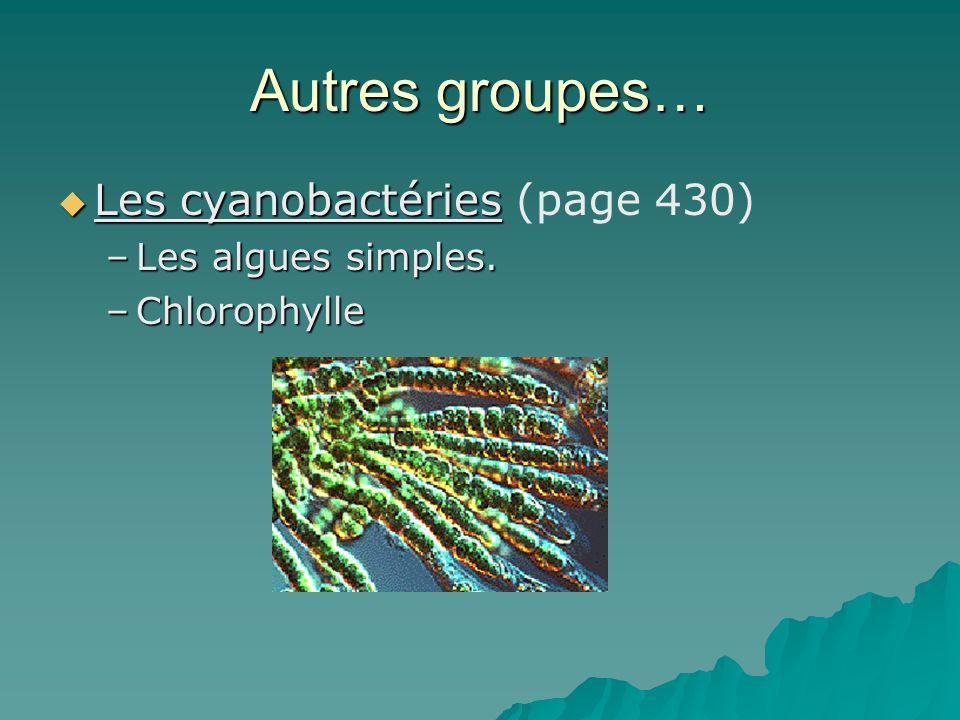 Autres groupes… Les cyanobactéries Les cyanobactéries (page 430) –Les algues simples. –Chlorophylle