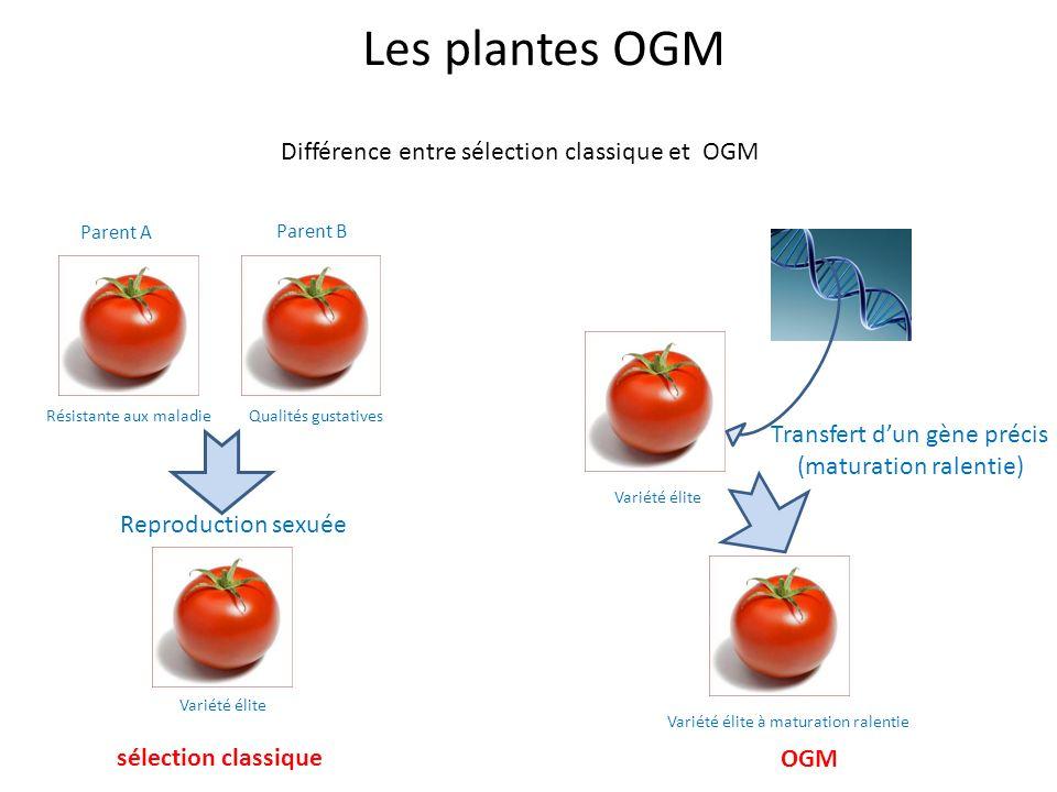 Les plantes OGM Différence entre sélection classique et OGM Résistante aux maladieQualités gustatives Parent A Parent B Reproduction sexuée Variété él