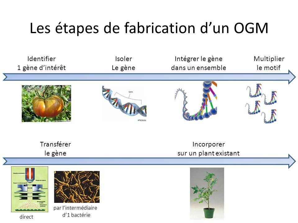 Les étapes de fabrication dun OGM Identifier 1 gène dintérêt Isoler Le gène Intégrer le gène dans un ensemble Multiplier le motif Transférer le gène I
