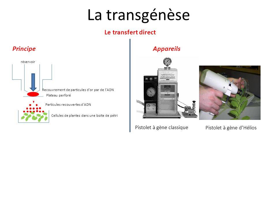 La transgénèse Le transfert direct Pistolet à gène classique Pistolet à gène dHélios PrincipeAppareils Plateau perforé Recouvrement de particules dor