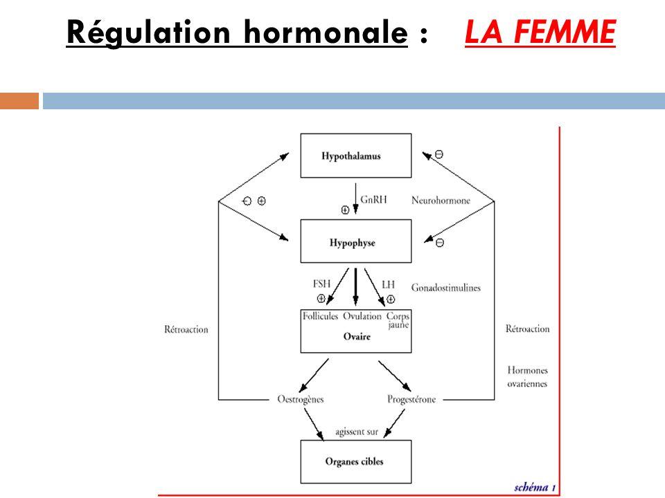 Régulation hormonale : LA FEMME