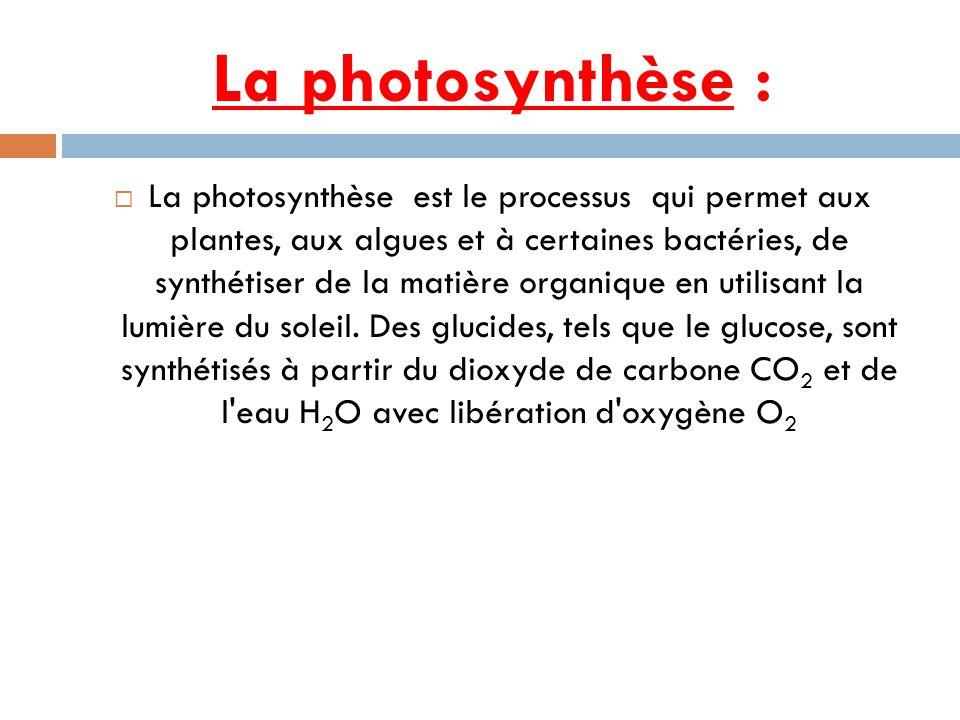 La photosynthèse : La photosynthèse est le processus qui permet aux plantes, aux algues et à certaines bactéries, de synthétiser de la matière organiq