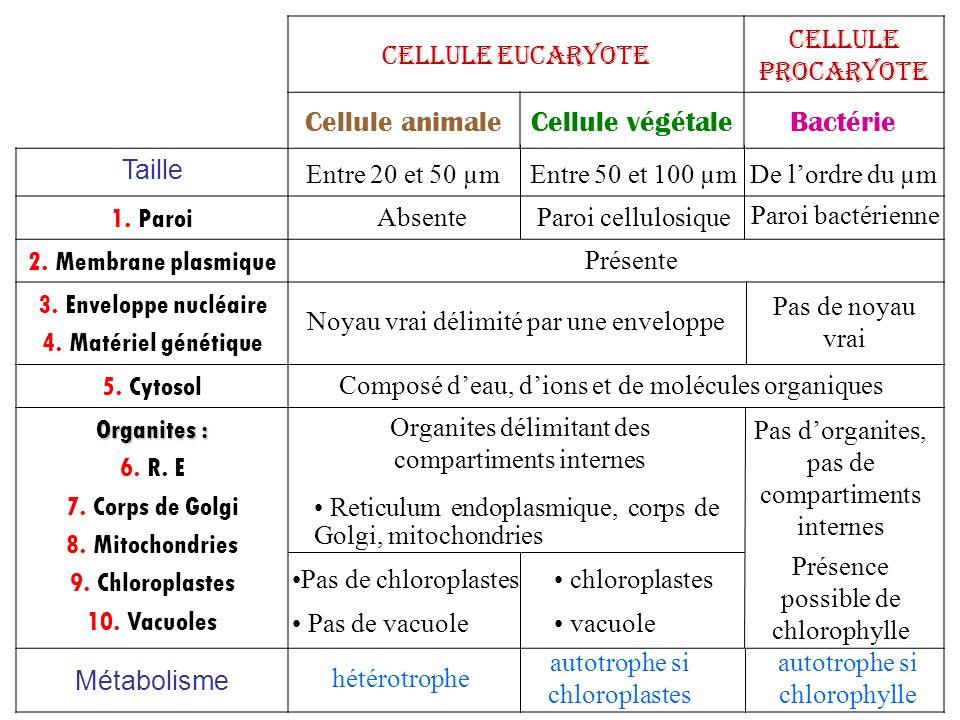 Cellule eucaryote Cellule procaryote Cellule animaleCellule végétaleBactérie Taille 1. Paroi 2. Membrane plasmique 3. Enveloppe nucléaire 4. Matériel