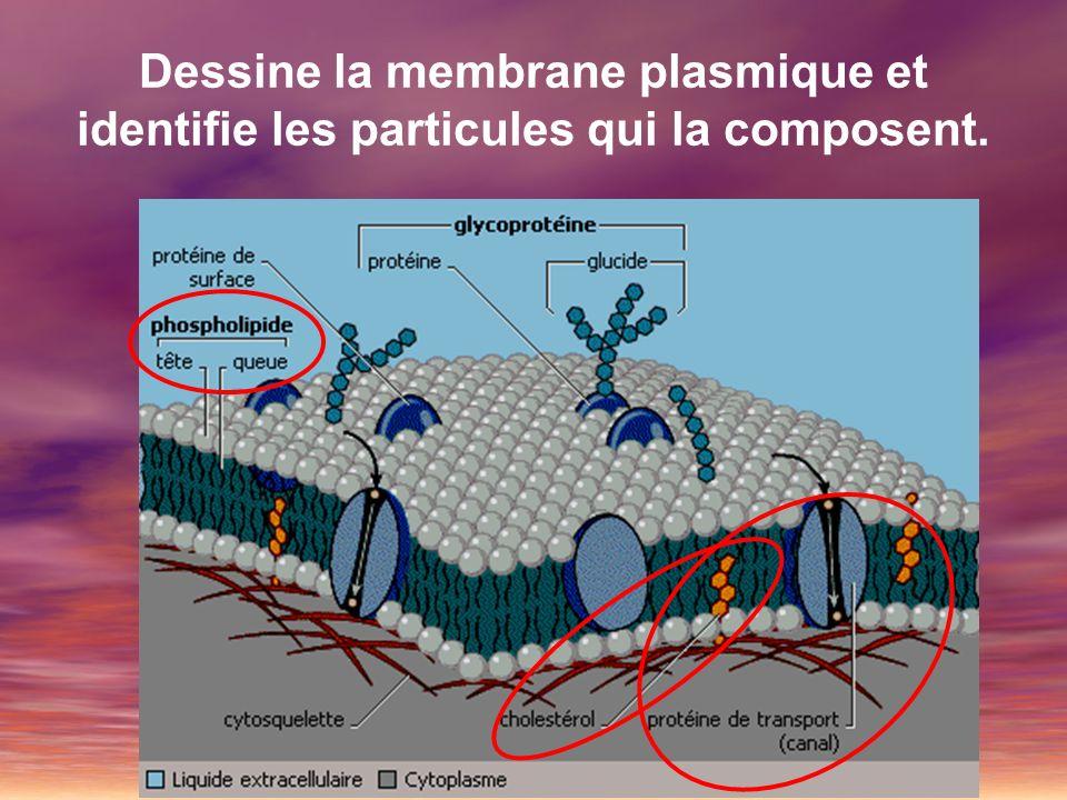 Dessine la membrane plasmique et identifie les particules qui la composent.