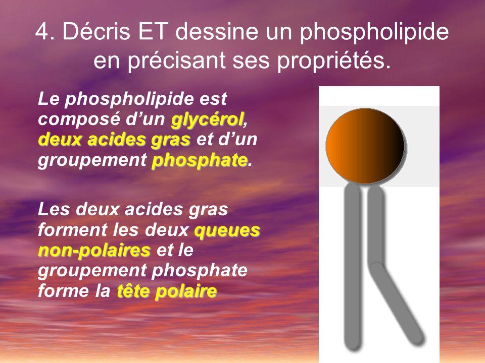 4. Décris ET dessine un phospholipide en précisant ses propriétés. glycérol deux acides gras phosphate Le phospholipide est composé dun glycérol, deux